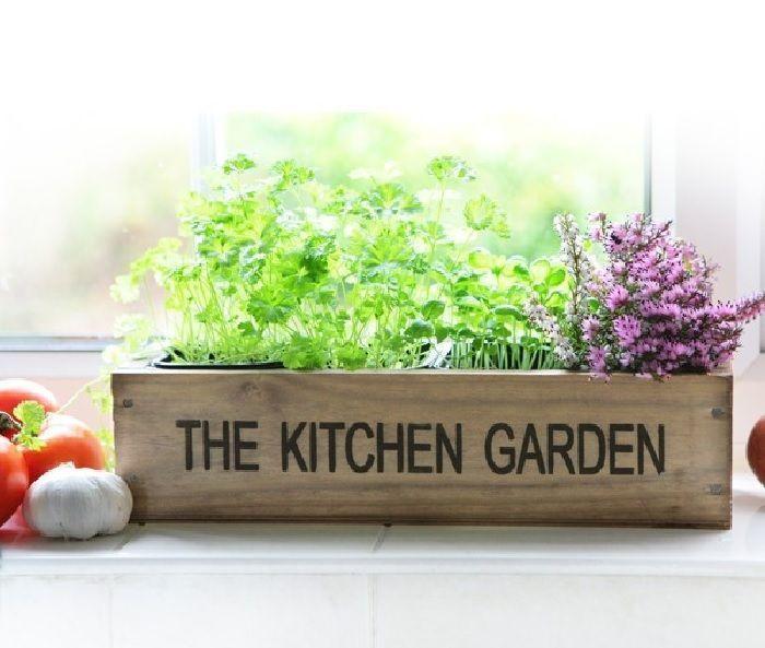 10 plantas arom ticas indispensables en tu casa plantas - Plantas en la cocina ...