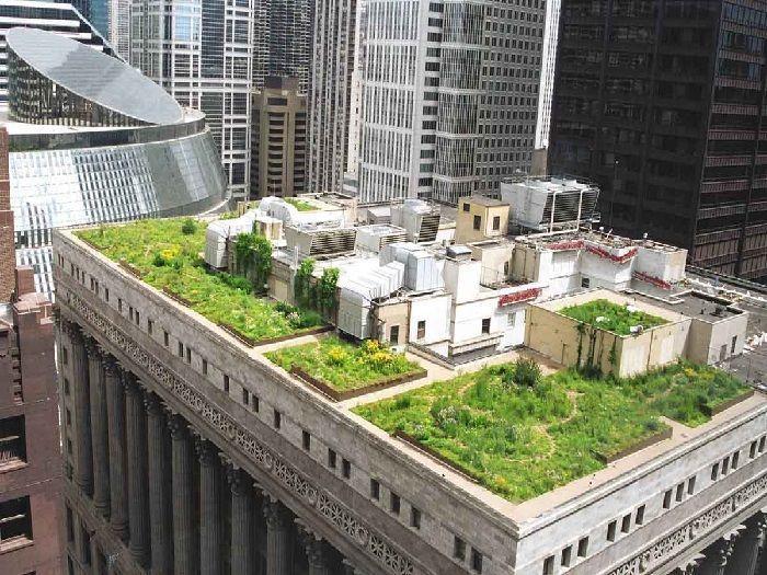 plantas aromáticas en azoteas de edificios