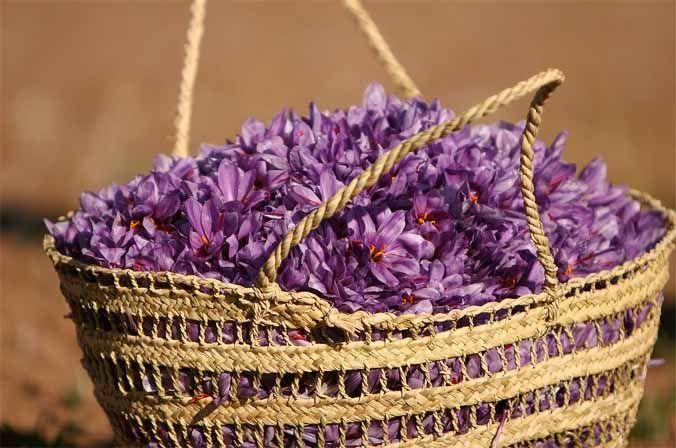 Cesto con flores de azafrán