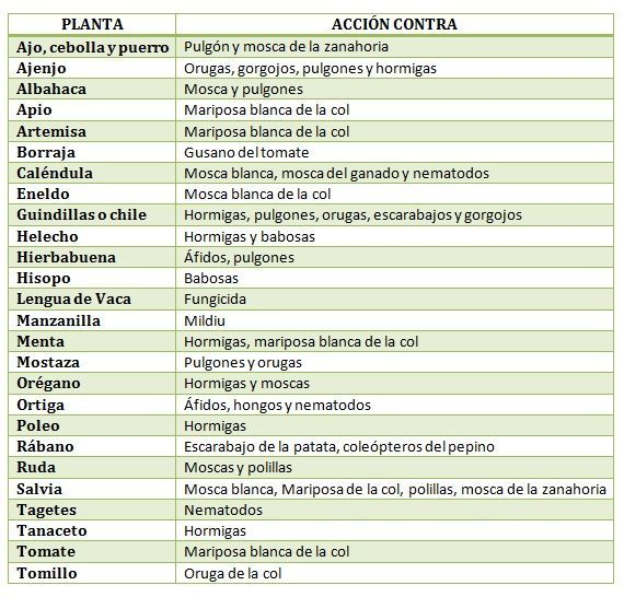 Efecto repelente de plantas medicinales