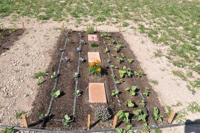 Huerto plantas medicinales y hortalizas
