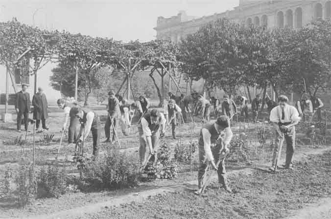 Resultado de imagen de historia de las plantas aromaticas