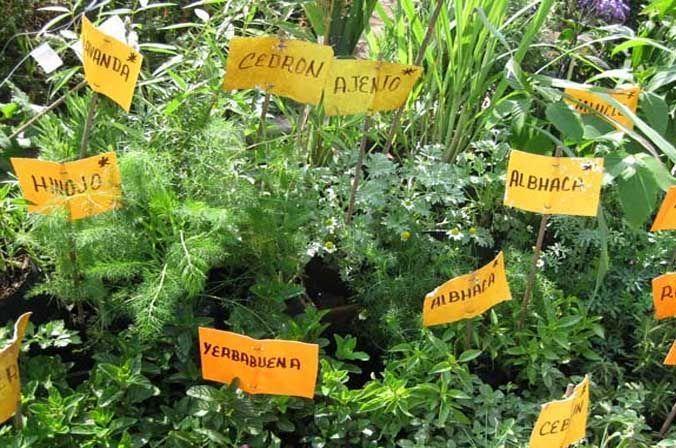 Plantas medicinales plantas arom ticas y medicinales for Jardin botanico medicinal